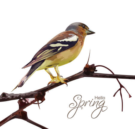 Sparrow on a branch isolated Vector. Spring card. spring moments
