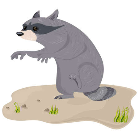 Raccoon isolated Vector. Cute cartoon character illustration