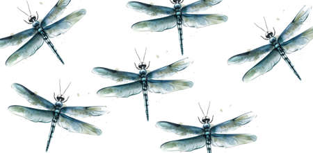 Dragon fly pattern Vector watercolor. Spring summer texture design