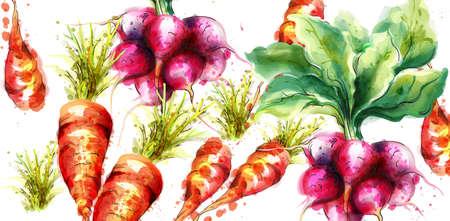 Carrots and radish Vector watercolor. Fresh spring veggies
