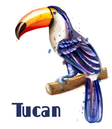 Toucan isolated Vector watercolor. Exotic summer template decor Ilustração