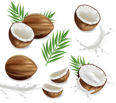 Coconuts with splash set collection Vector realistic. Layout template tropic exotic card 向量圖像