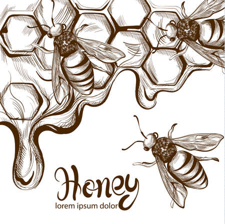 Honey, bees combs  line art. Retro vintage old effect styles
