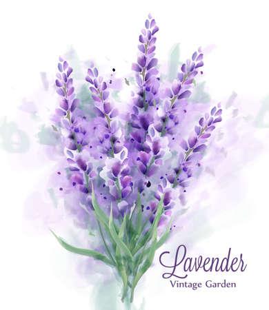 Lavender bouquet watercolor Vector. Delicate floral decor. Spring summer banner templates