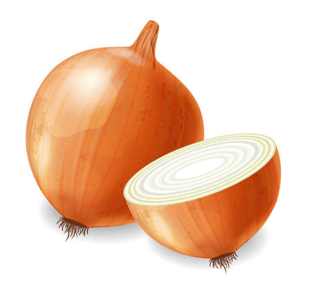 Onion vector realistic isolated on white 3d illustration