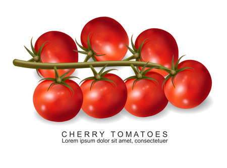 Cherry tomatoes vector realistic isolated on white 3d illustrations 向量圖像
