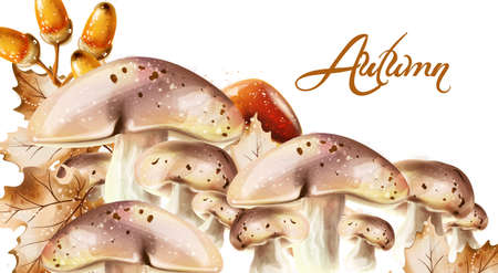 Fall mushrooms and fruits decor posters Stock Illustratie