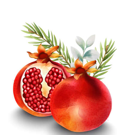 Natural red half sliced pomegranate with fir leaves on background