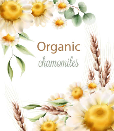 Organic chamomiles flowers with green leaves and wheat spike Illustration