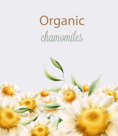 Organic chamomiles flowers with green leaves Illustration