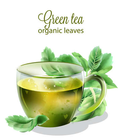 Organic green tea with mint leaves Illustration