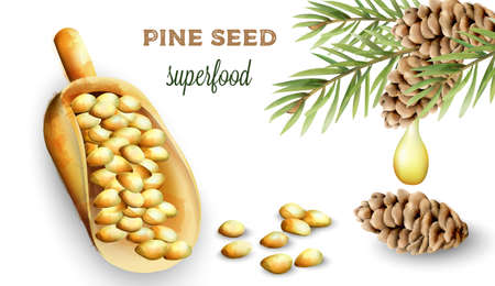 Pine nuts in shovel. Cone with green leaves and oil dripping. Watercolor vector