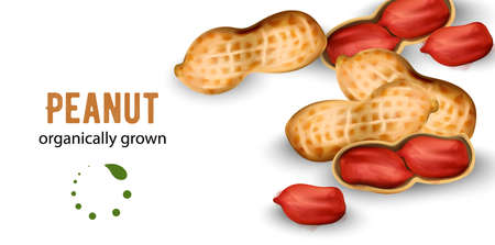 Organically grown peanuts in watercolor style Ilustração