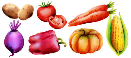 Colorful line art composition with bio vegetables