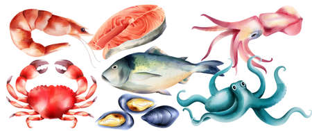 Watercolor fresh fish and mollusc from the sea. Shrimp, steak, crab, oysters, octopus. Vector set 일러스트