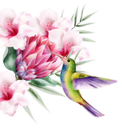 Watercolor tropical paradise bird with colorful feathers. Flying near rose flowers. Vector 向量圖像