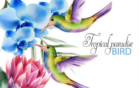 Watercolor tropical paradise birds with colorful feathers. Flying near rose and blue flowers. Vector 向量圖像
