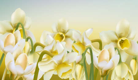 Spring meadow of daffodil flowers in watercolor style