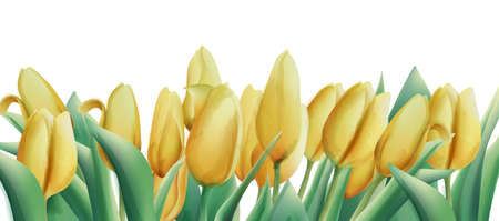 Yellow watercolor tulip flowers with green leaves.