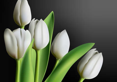 Realistic three dimensional white tulip flowers on black gradient Иллюстрация