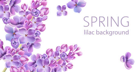 Lilac flower background. Springtime flowers. Watercolors