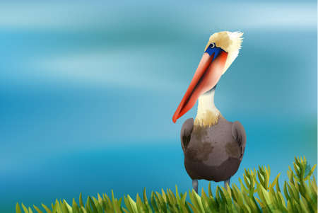 Colorful pelican sitting in grass on ocean background. Vector Ilustração