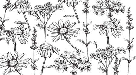 Chamomile, lavender and herbal flowers in line art style. Vectors