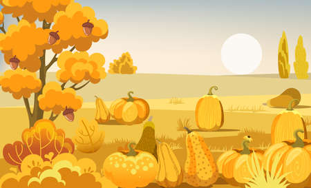Field with pumpkins, bushes and a tree with acorns. Autumn thematics