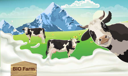 Three cows with black spots on a meadow looking at the camera. Mountains and blue sky in the background. Splashing milk from bio farm Standard-Bild - 155515259