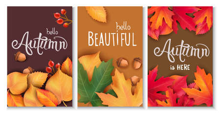 Set of three cards with leaves, acorns and berries. Autumnal thematics. Beautiful season 일러스트