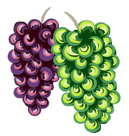 Composition of white and purple bunches of grapes. Traditional art style