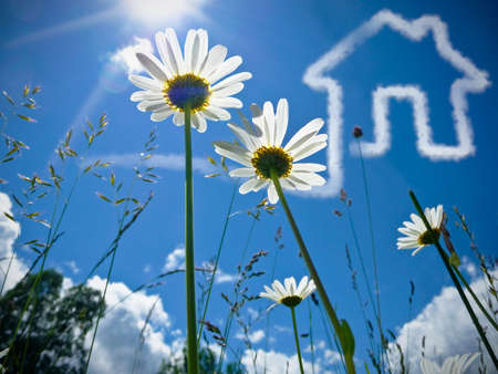 real man: A nice Closeup Flowers-Shot with a House in the sky. Concept for real estate business and family home safety.