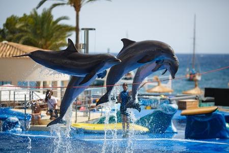 Palma de Mallorca, Spain, July 18 2014: Dolphins show in Dolphinarium of the Palma de Mallorca Editorial