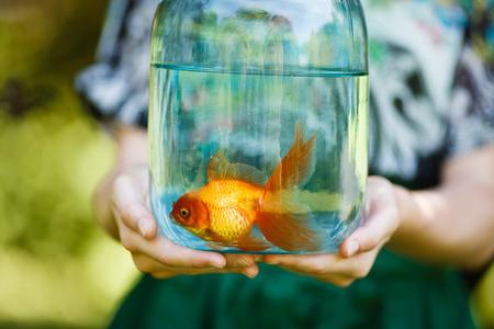 pez dorado: Jarra con peces de oro en manos de la chica joven