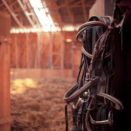Leather horse bridles and bits hanging on wall of stable in sunrays