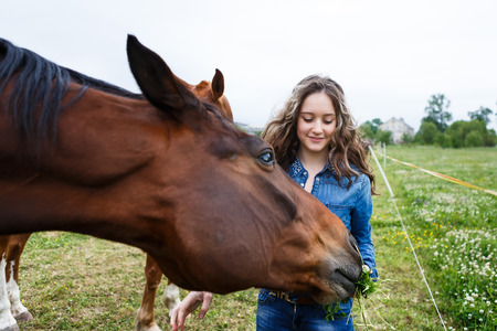 horses in field: Young beautiful girl feeding a horse at summer time Stock Photo