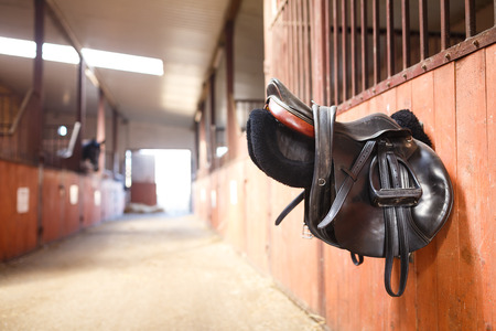 A leather saddles horse in a stable Stockfoto