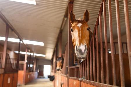 安定したドアを見ている馬の頭