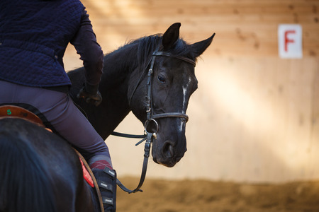 A rider on the horse in training