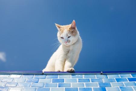 distrust: Playful white cat looks inside the empty pool