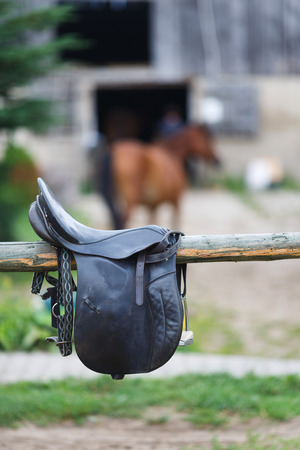 reigns: A leather saddles horse in a stable at the summer time
