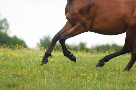 Running wild horse on the meadow at the summer time Stock Photo