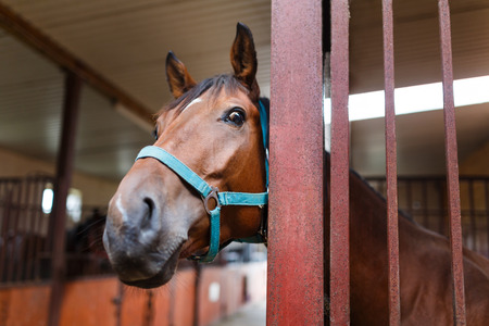 Portrait of a curious horse in a stable Archivio Fotografico