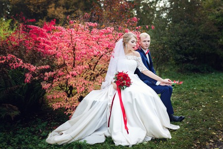 red bush: Romantic wedding couple sitting on a bench near the red bush