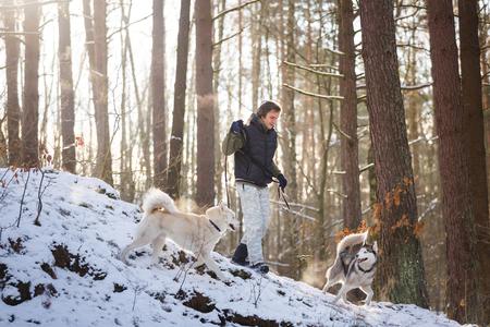 alaskian: Man walking with husky dogs in winter forest