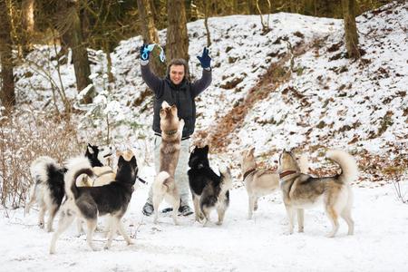alaskian: The man feeding the dogs in winter forest