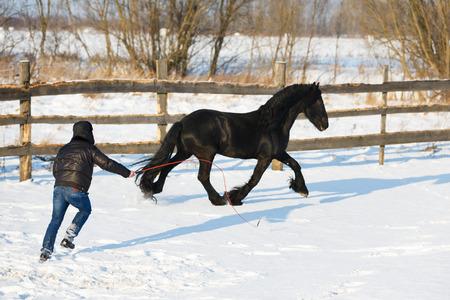 chestnut male: Man dressage black frisian horse outdoor in winter