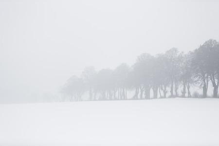 冬の霧で木の行