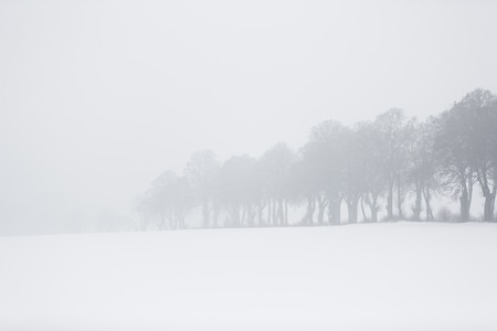 The row of trees in winter fog