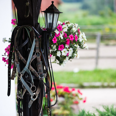 reigns: Leather horse bridles and bits hanging on wall of stable outdoor